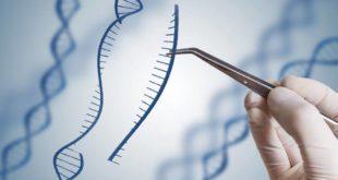 آزمایشات ژنتیک و کاریوتایپ